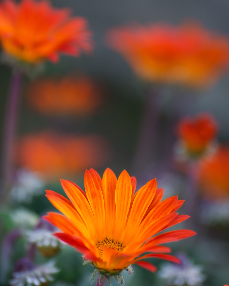 Flower orange-
